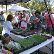 Alliance for the Arts GreenMarket