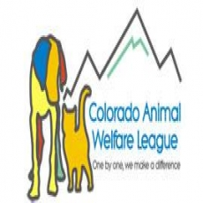 Rescue and adoption of homeless animals