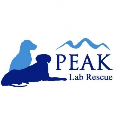 To see every Lab in NC find a loving home.