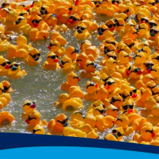 Incredible Duck Race